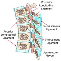 Ligaments in Low Back