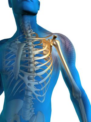 Illustration of Shoulder Skeleton